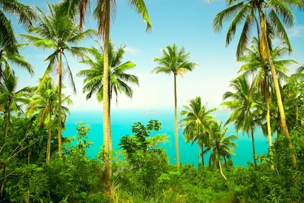 코코넛 야자수와 멋진 열대 숲의 전망 프리미엄 사진