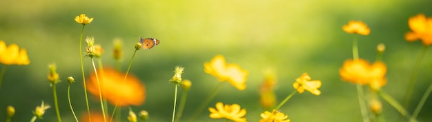 コピースペースと緑の性質のぼやけた表面を持つ若い黄色い花のオレンジ色の蝶のビュー