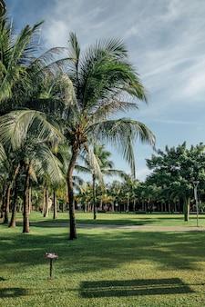 Вид на пальмы