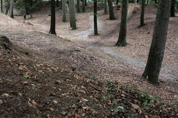 丘陵のレリーフのある森の小道の眺め。風景の概念、背景。