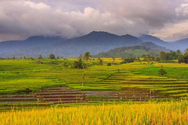 美しい小さな村の田んぼの眺め