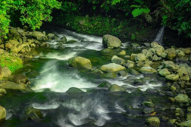 Вид на речную воду утром с солнечным светом с зелеными листьями в тропическом лесу азии