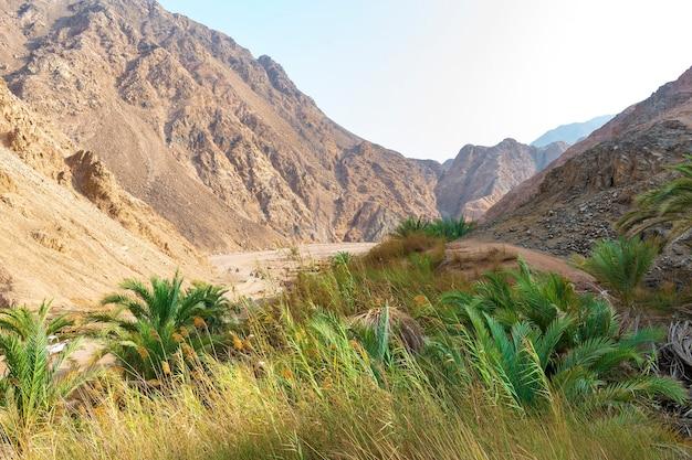 砂の山々の峡谷砂漠の谷、夏のアフリカの緑の自然のオアシスの風景の眺め。