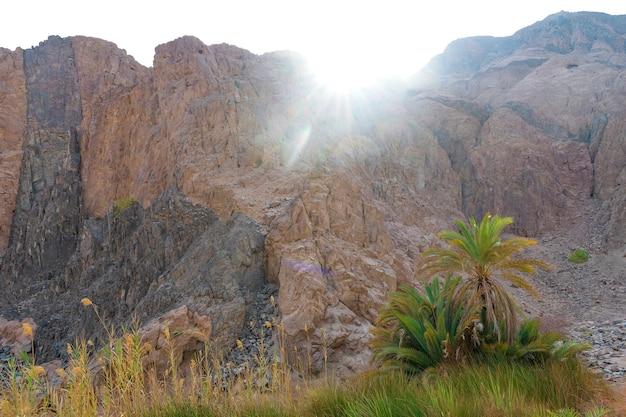 日没、夏のアフリカの緑の自然のオアシスの風景、自然の荒野に対して砂岩の山々の峡谷砂漠の谷の眺め。