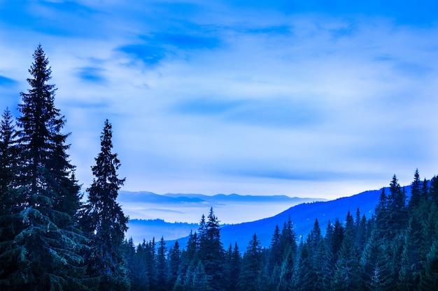 구과 맺는 나무와 언덕 위의 새하얀 하늘이 있는 아름다운 풍경의 전망. 소나무 숲이 있는 장엄한 산 계곡의 이른 아침. 자연의 아름다움의 개념입니다.