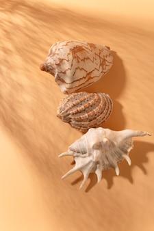 茶色の背景に貝殻のビュー