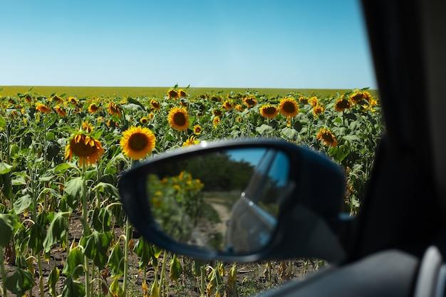 車内の晴れた日のひまわり畑の眺め。