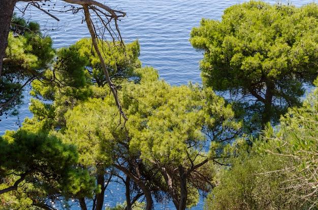 緑の葉を通して上からアドリア海の眺め