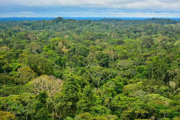 아마존 지역의 모습