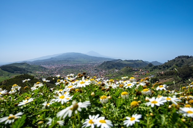 Вид на горы анага на севере тенерифе в испании