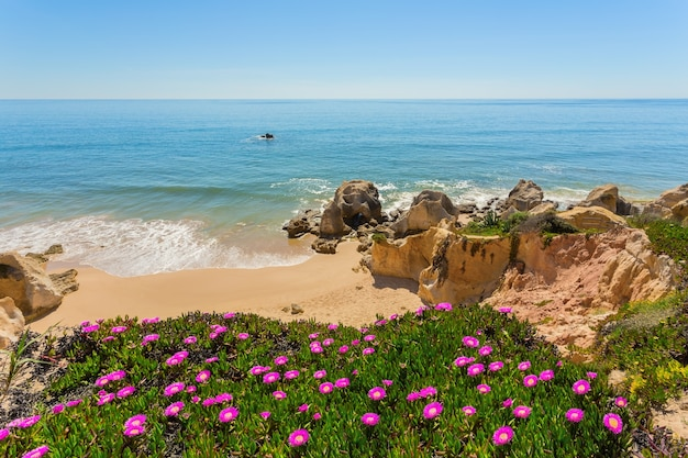 Вид на пляж сверху цветы весны. албуфейра португалия.