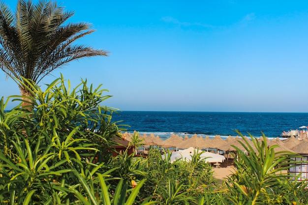 紅海のビーチの眺め