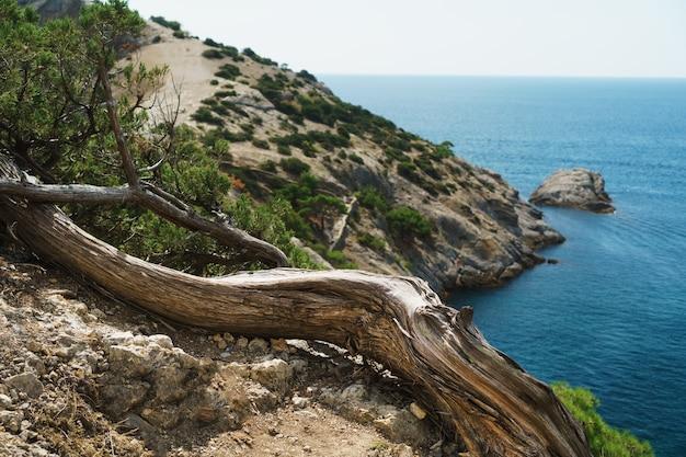 手前に引っ掛かりがある崖からの青い海の眺め。