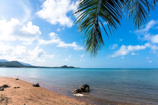 Вид на синее море под пальмами на пляже. самуи таиланд