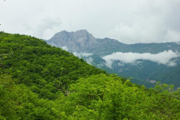 Вид на густой лес и горы под голубым небом. гора хуступ