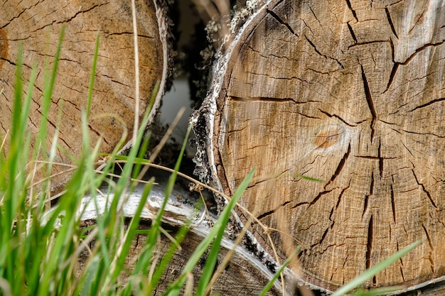 緑の草の葉の後ろで互いに重なり合って横たわっている挽かれた白樺の丸太の端のビュー