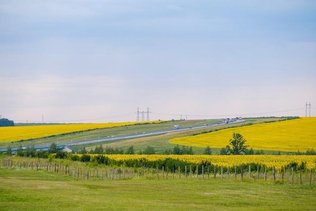 노란 해바라기가 만발한 들판 사이의 고속도로 전망. 자동차는 도로를 따라 고속으로 이동합니다. 여름날.