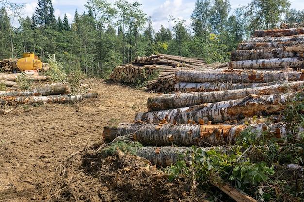 Вид на вырубку - вырубленная земля и стопки пиленого бревна