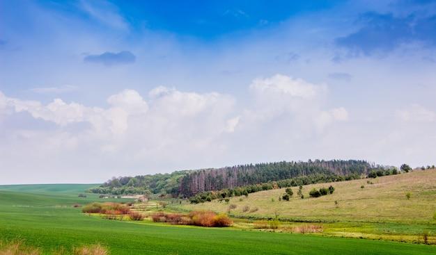 晴れた夏の日の畑の端にある森の眺め