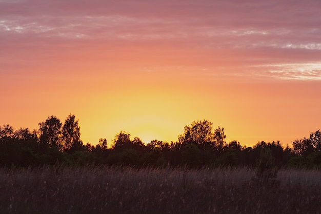ピンクオレンジ色の森のフィールドと日没時の明るくカラフルな空の眺め。