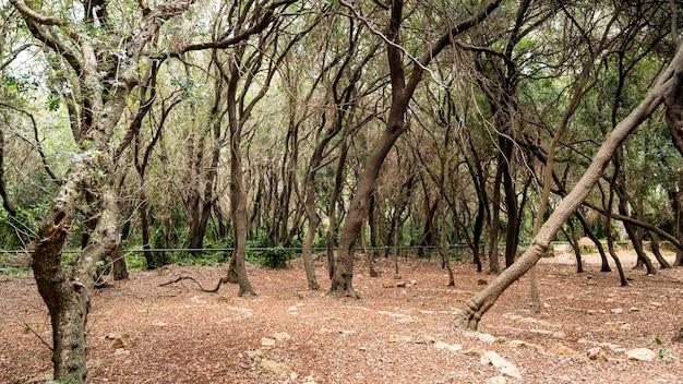 サントマルグリット島、フランスの森の眺め
