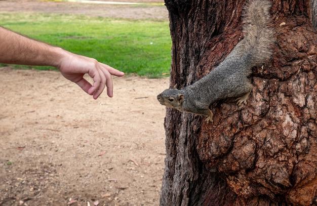 木のリスに触れようとしている男の手のビュー