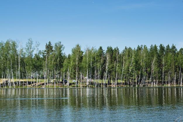 明るい晴れた日に白樺が生えている湖の景色、遠くにキャンピングカー