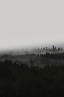 ノルウェーの霧の森の眺め
