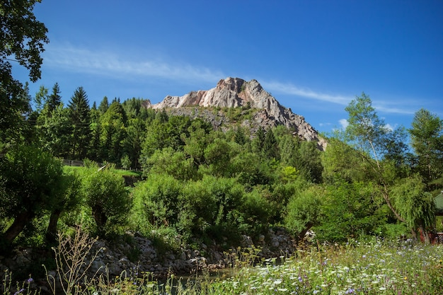숲과 꽃밭 아래 산봉우리의 전망.