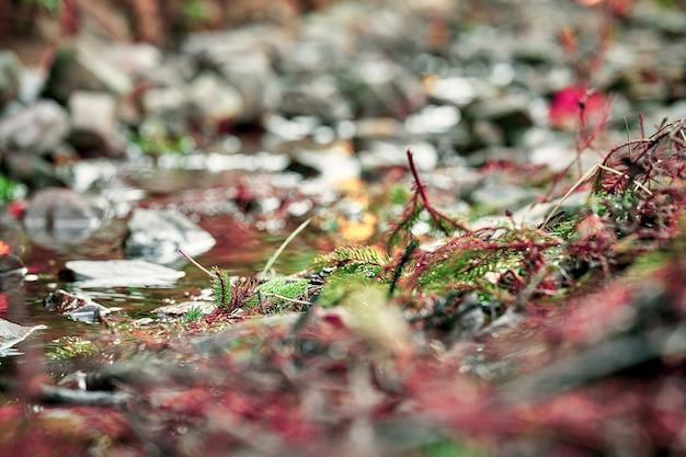 Вид на горную реку с камнями и скалами. малая глубина резкости. размытое боке