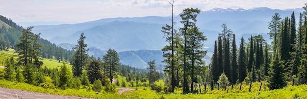 Вид на горную долину с перевала, летняя зелень, деревья, утро