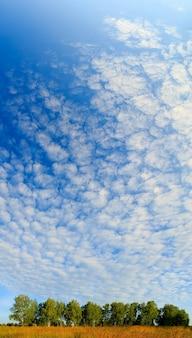 Вид на небо над березовой рощей