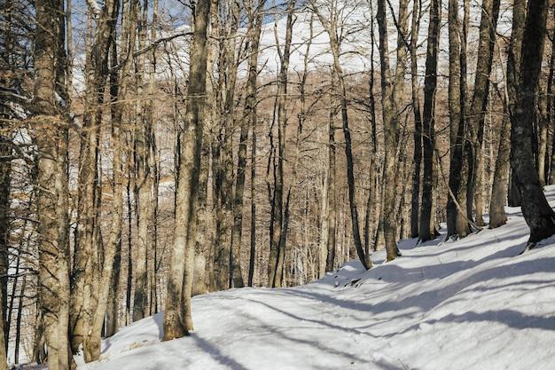 겨울에 산에 눈 덮인 숲의 전망.