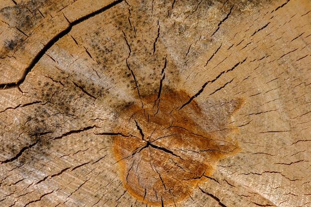 ひびの蜘蛛の巣が点在する白樺の丸太の端面の表面の眺め