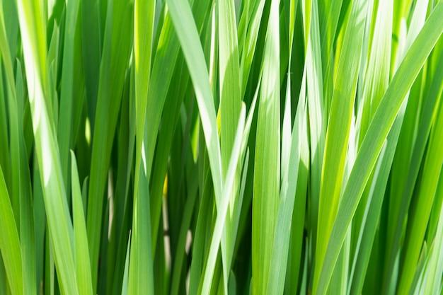 Вид на густую высокую зеленую траву