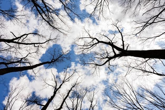 青い空と白い雲の背景の背景に暗い木のてっぺんの眺め。