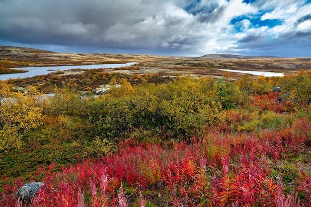 Вид на тундровое пространство с осенней растительностью. крайний север россии.