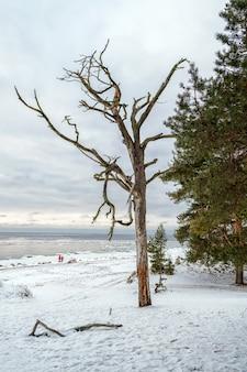 나무의 가지를 통해 겨울 발트 해의 전망.
