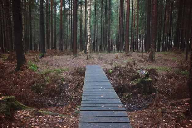 Вид на деревянный мост, лежащий впереди, переброшенный через канаву в еловом лесу осенью
