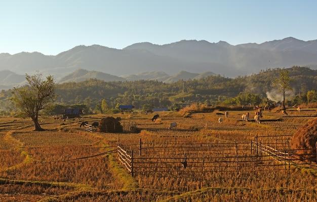 タイ北部の伝統的な農場の眺め