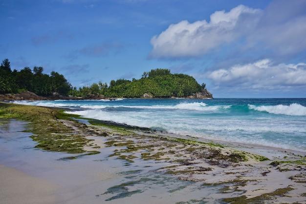 열 대 꿈꾸는 해변 anse bazarca, 마헤 섬, 세이셸의 전망. 하얀 가루 모래, 푸른 물, 무성.