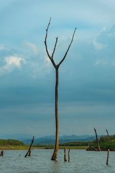 Взгляд поля тропического леса в таиланде