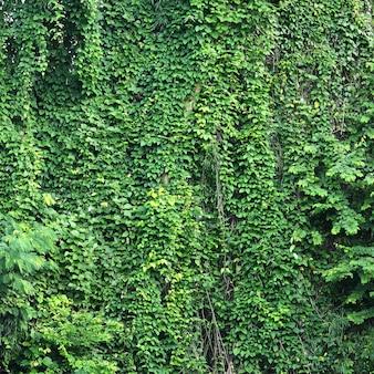 タイの熱帯雨林の眺め