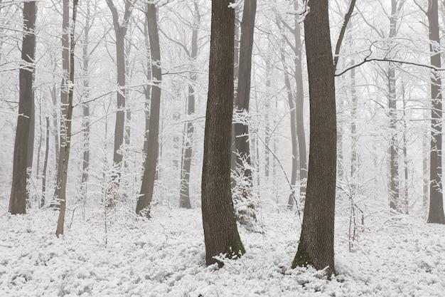 凍るような朝の冬の森の眺め