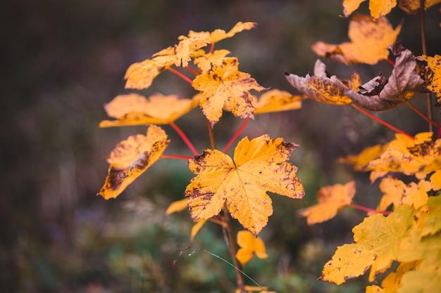 黄色の葉のある植物のビュー