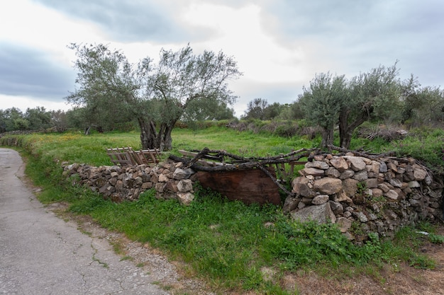 View of olive trees and meadow