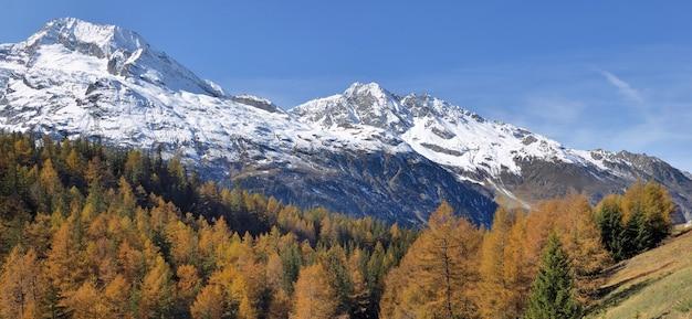 푸른 하늘 아래 눈 덮인 알파인 mountant와 피크 산의 단풍 숲에서보기