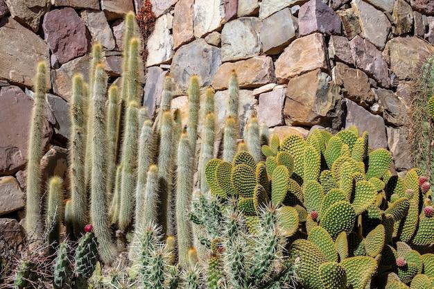 아르헨티나의 선인장 식물에서보기