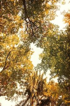 가을 숲, 폴란드에서 높은 나무에 보기