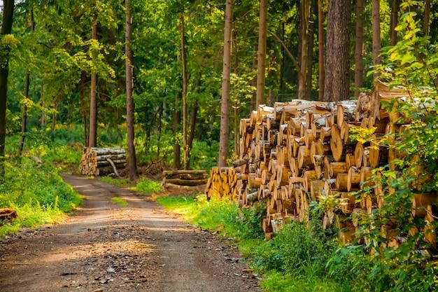 ポーランド、ズデーテンの森の丸太を見る